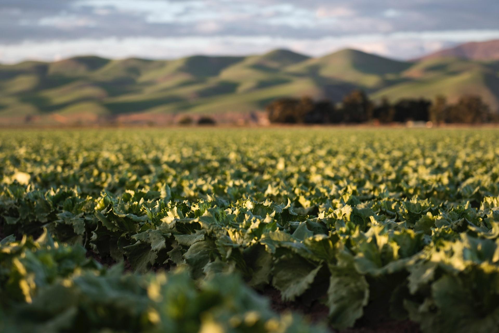 Comienzo de año para el sector hortofrutícola y la industria alimentaria